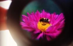 Dia van bloem